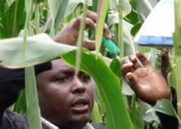 CABI launches space-age technology to fight crop-devastating pest outbrakes in Kenya